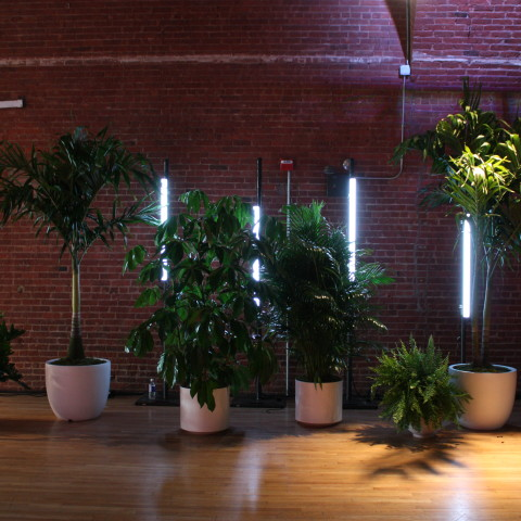 potted plants, interior office plants nyc, corporate event plants nyc, rachel cho floral desgin