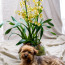 potted orchids, oncidium orchids, potted orchids nyc, rachel cho floral design