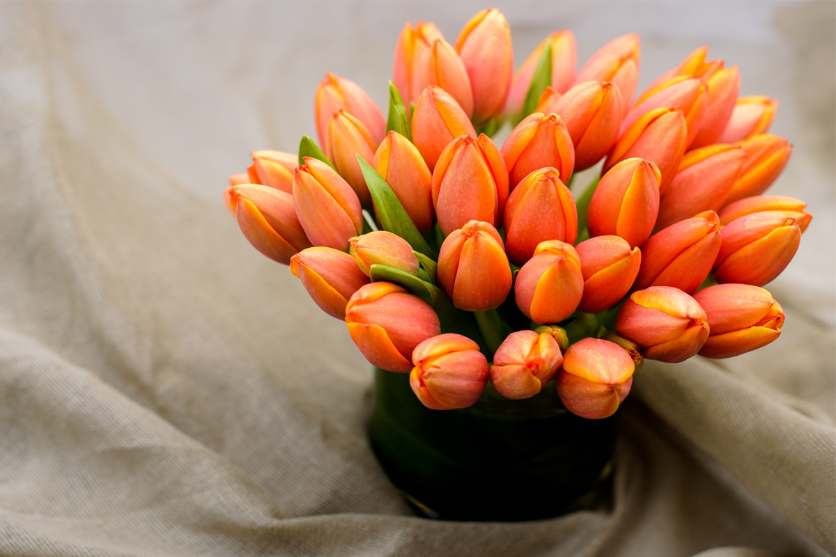 same day flower delivery NYC, tulips, Rachel Cho Floral Design