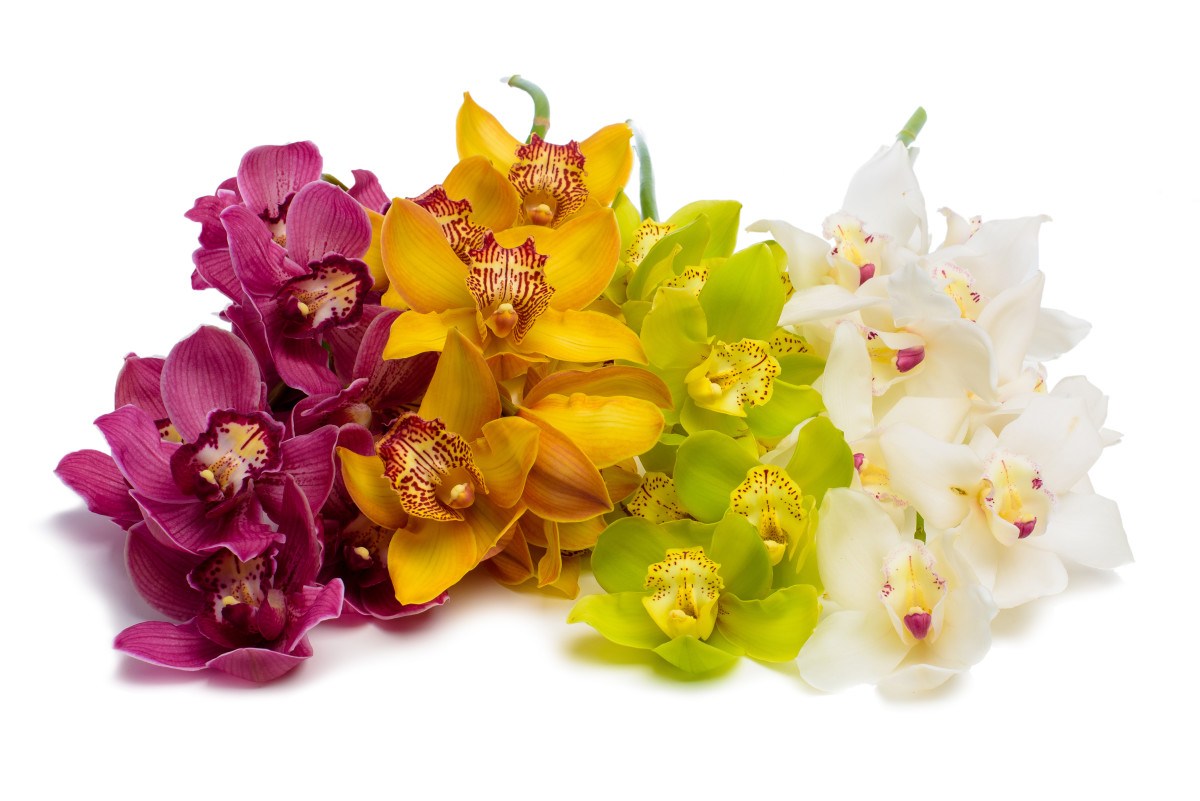 orchids, cymidium orchids, luxury flower gift delivery nyc, rachel cho floral design