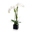 potted orchids, potted orchid delivery nyc, luxury flower gift delivery nyc, phalaenopsis orchid, rachel cho floral design