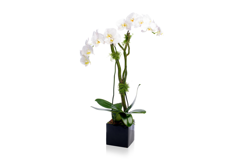 Rachel Cho Flowers | Floral Designer | orchids