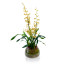 potted orchids, potted orchid delivery nyc, luxury flower gift delivery nyc, oncidium, rachel cho floral design