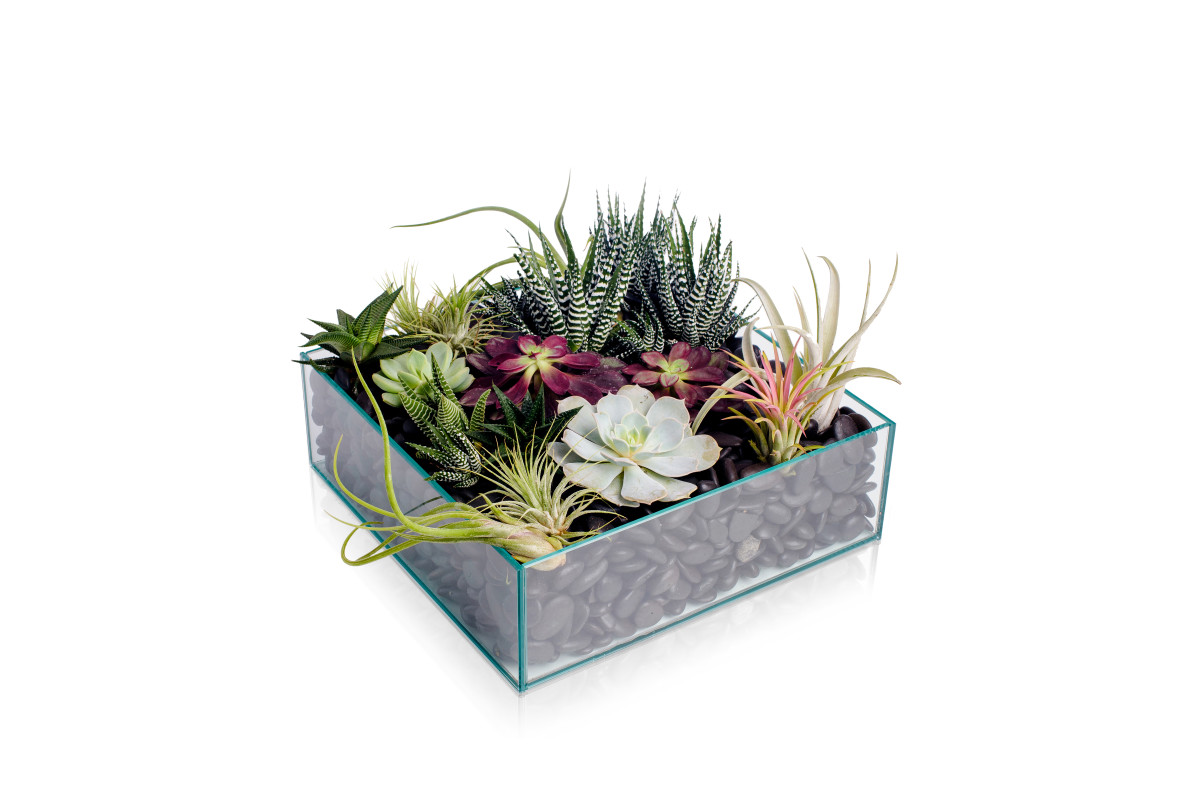 potted succulents, corporate office plants nyc, succulent garden, rachel cho floral design
