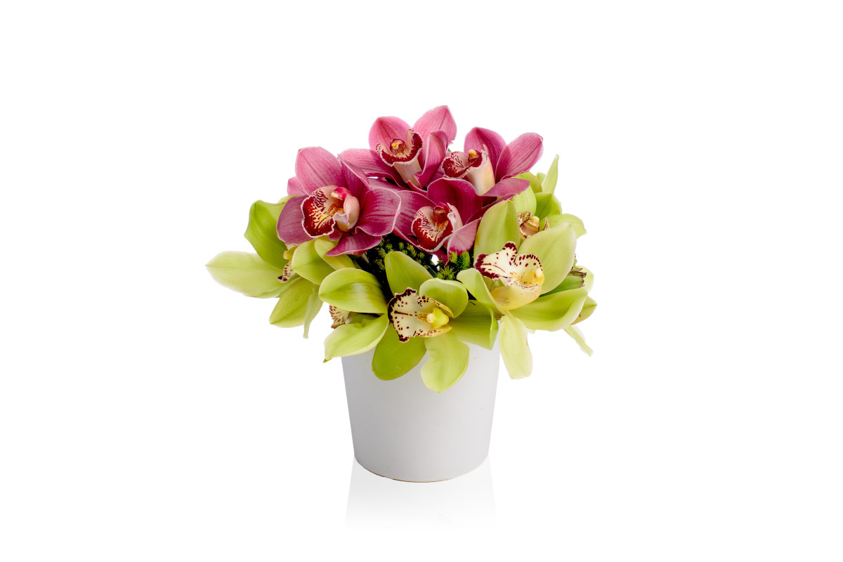 cymbidium orchids, flower gift delivery nyc, orchid gift delivery, luxury flowers nyc, rachel cho floral design