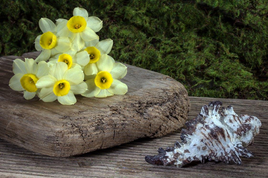 Spring Flower Guide Rachel Cho