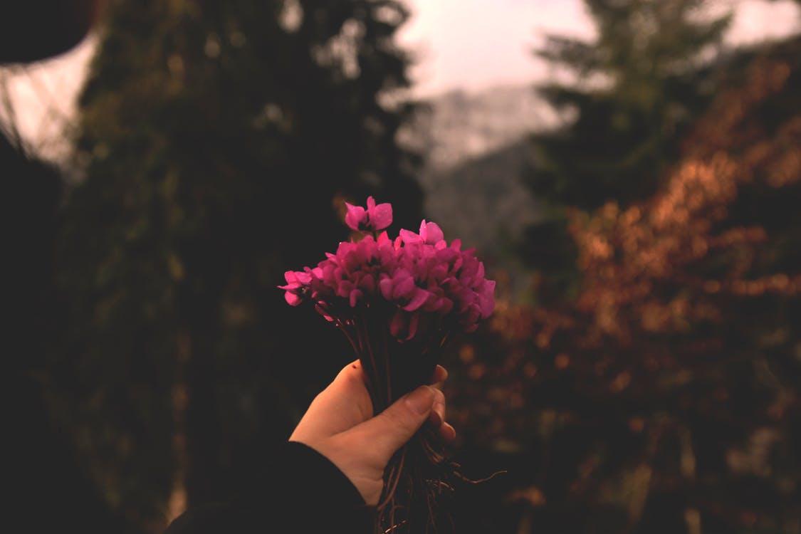 Rachel Cho Flowers | Floral Designer | cyclamen