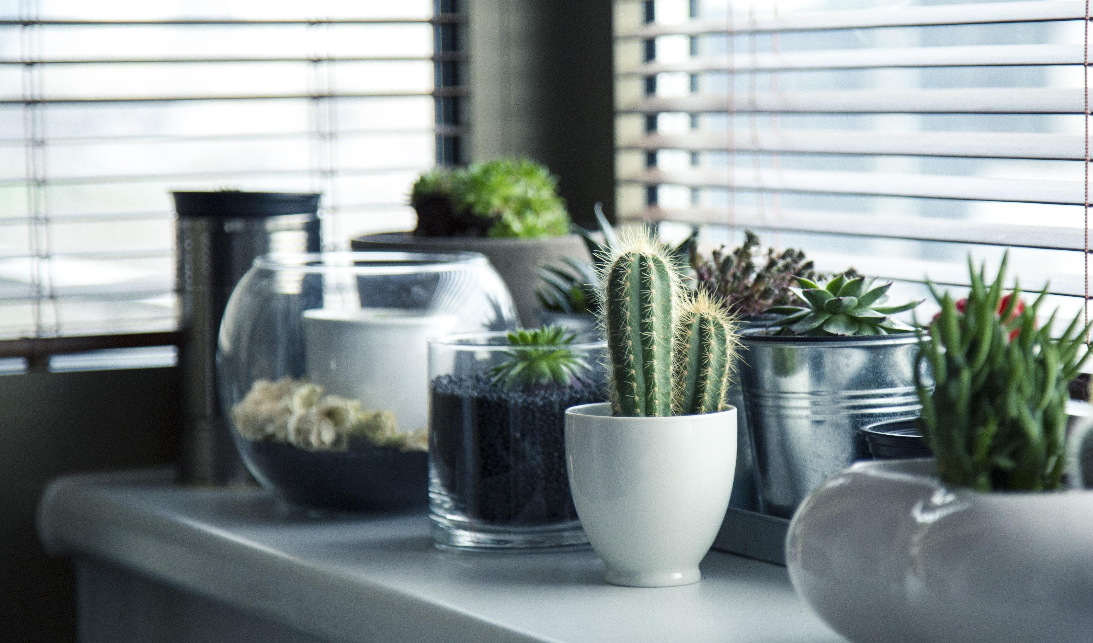 How To Make Your Own Indoor Succulent Garden Rachel Cho