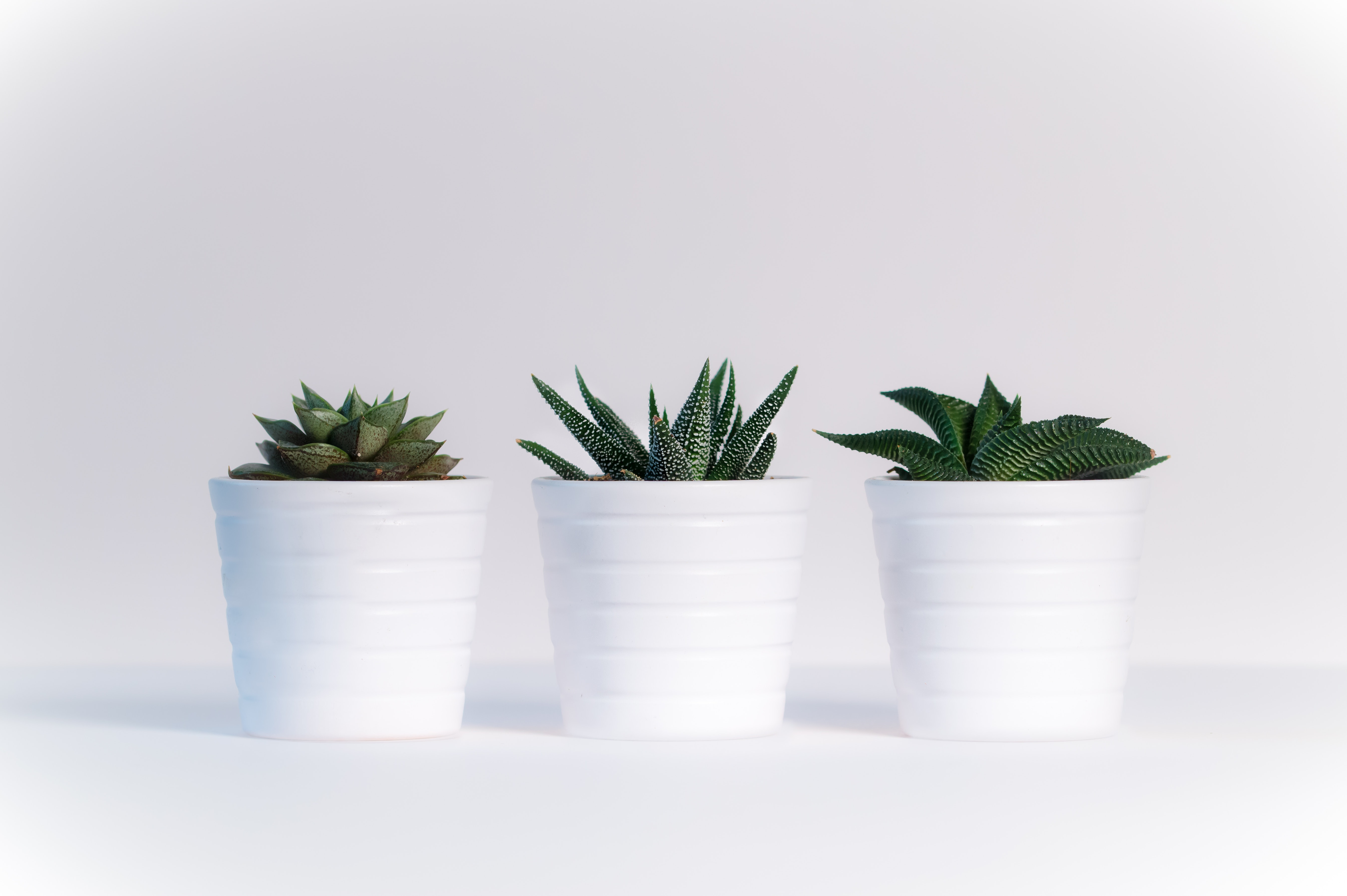 The Best Succulents For Your Office