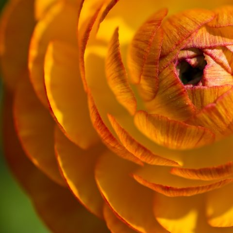 5 Most Popular Valentine's Day Flowers
