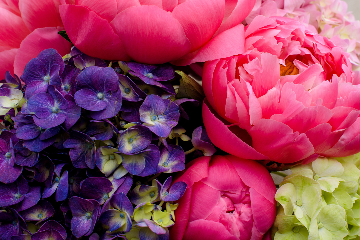 May Gray Got You Down? Welcome Summer with These 5 Flowers