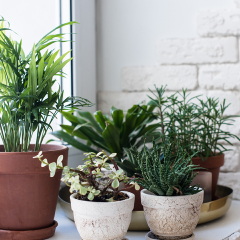 Why plant delivery in New York is good for the soul