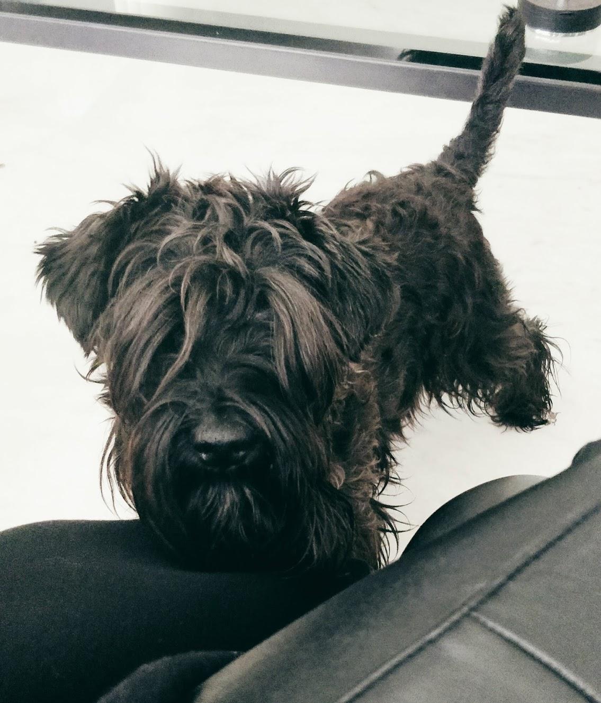 My dog, Bertie