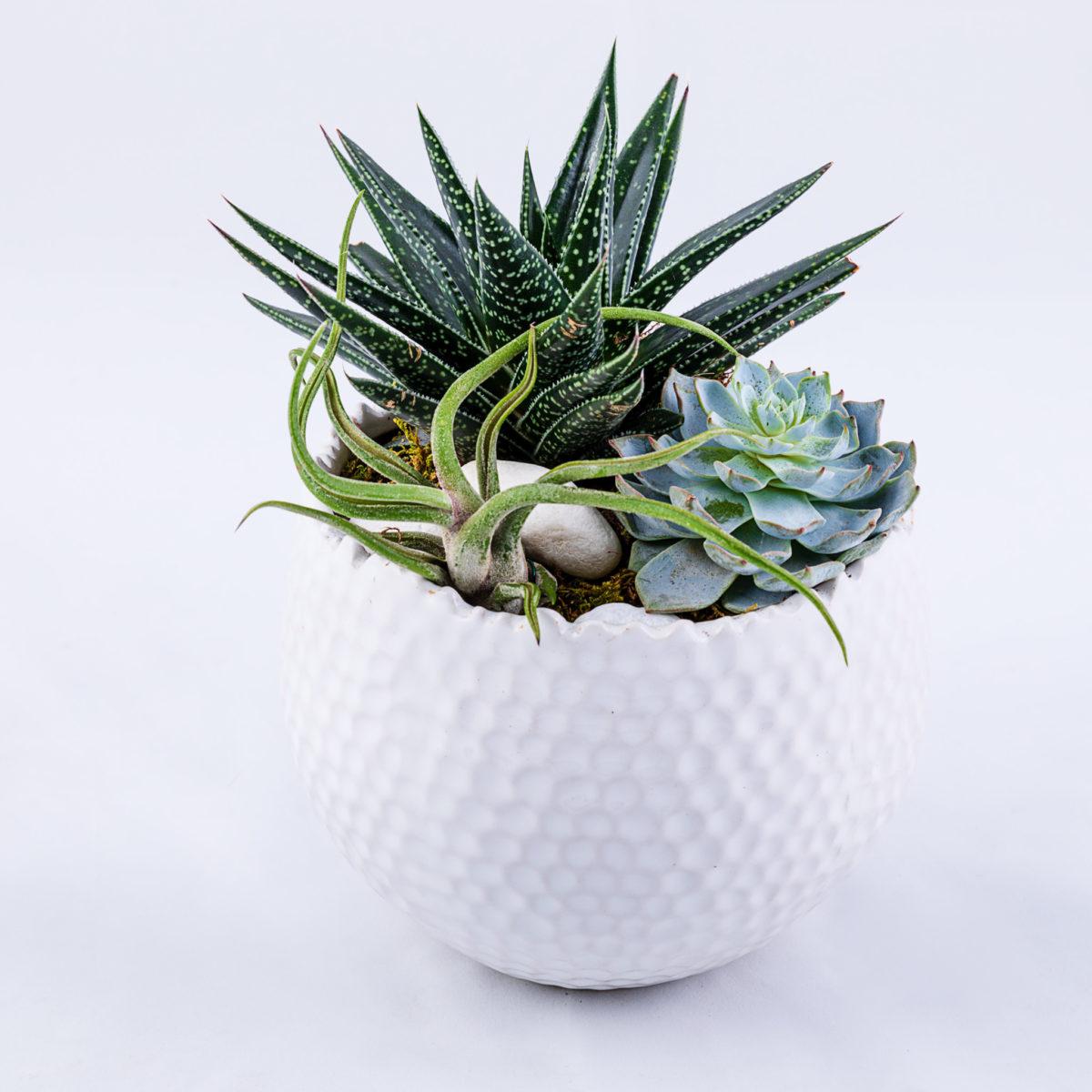 Rachel Cho Flowers   Floral Designer   Plants