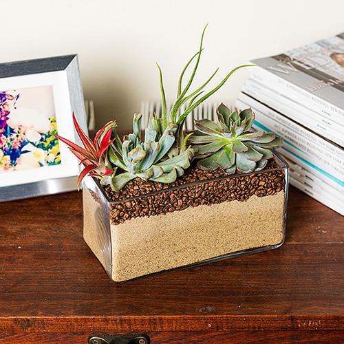 Rachel Cho Flowers | Floral Designer | Succulents
