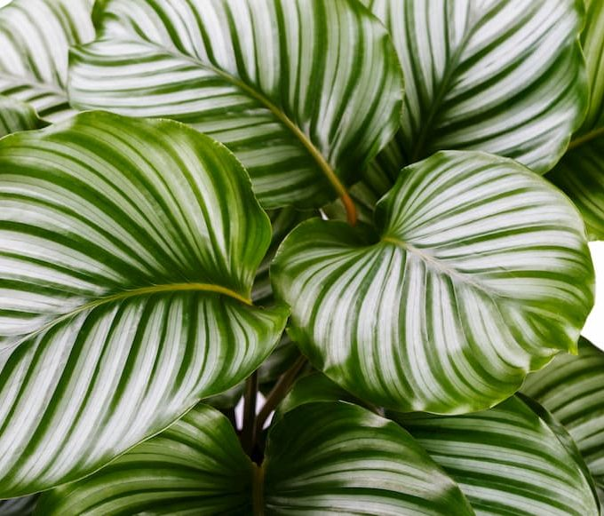 Plants To Love & Plants To Avoid If You Are A Pet Owner